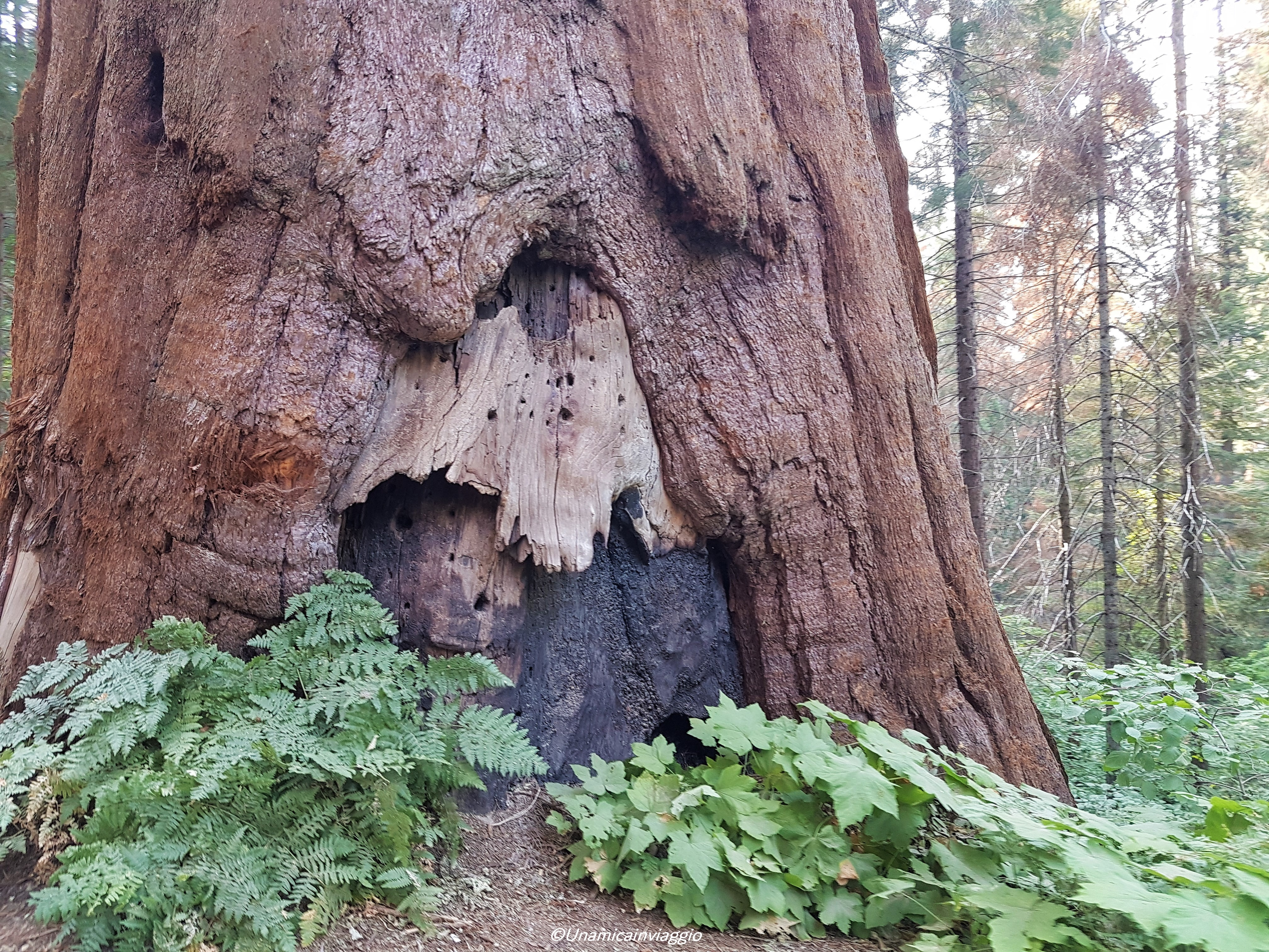 visitare il sequoia national park
